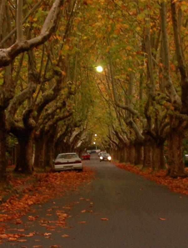 Victoria Avenue Canterbury
